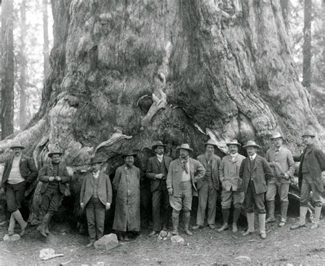 Theodore Roosevelt, before the 'Grizley Giant,' big trees